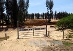 Thủ tướng yêu cầu làm rõ vấn đề phá rừng phòng hộ tại Phú Yên