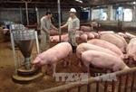 """Các nhà bán lẻ gửi thư ngỏ kêu gọi 'giải cứu"""" thịt lợn"""