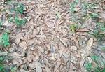 Cộng đồng mạng 'bấn loạn' tìm rắn độc ngụy trang trong đám lá khô
