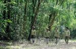 Đà Nẵng chú trọng bảo vệ rừng tại các vùng trọng điểm