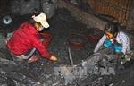 Cà Mau: Chính quyền ráo riết truy quét, nhiều lò hầm than vẫn ngang nhiên hoạt động