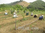 Thoát nghèo nhờ mô hình trang trại tổng hợp
