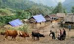 Bộ đội Biên phòng giúp dân làm kinh tế