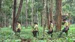 Nhiều chính sách thiết thực để bảo vệ rừng Tây Nguyên