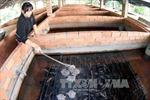Quảng Ngãi: Ươm thành công giống lươn nuôi không bùn