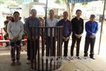 Xét xử băng nhóm trộm chó chuyên nghiệp tại Tây Ninh