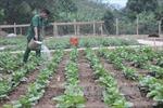 Giữ vững vùng biên, giúp dân xây dựng nông thôn mới