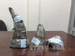 Bắt quả tang tại nhà chứa 18 khúc sừng tê giác