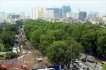 Cận cảnh hơn 1.000 cây xà cừ trong dự án mở đường trên 3.000 tỷ đồng