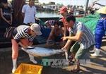 Thừa Thiên - Huế tăng sản lượng đánh bắt sau sự cố môi trường biển