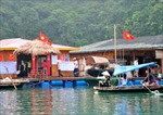 Phát triển bền vững vịnh Hạ Long - Bài 1: Làng chài Vung Viêng sản xuất gắn với bảo vệ môi trường biển
