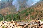 Lâm Đồng: Bắt quả tang 4 đối tượng triệt hạ nhiều cây gỗ quý hiếm