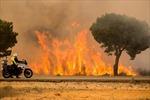 Cháy lớn tại khu bảo tồn tự nhiên của Tây Ban Nha, hàng nghìn người phải sơ tán