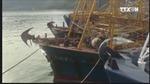 Kiến nghị khởi tố doanh nghiệp đóng tàu vỏ thép tại Bình Định