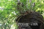 Du lịch Việt Nam: Độc đáo Khu bảo tồn lan rừng Troh Bư