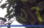 Cận cảnh hàng nghìn con sâu lạ hoành hành tại Bình Dương