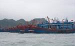 Hải Phòng đình chỉ hoạt động trên biển, Thái Bình tích cực ứng phó bão
