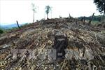 Tỷ lệ đất rừng che phủ cả nước chỉ hơn 41%