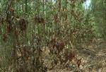 Đồng Nai điều tra vụ hàng trăm cây gỗ quý bị đầu độc bằng thuốc diệt cỏ