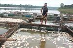 Cá lăng chết hàng loạt ở lòng hồ Suối Giai, Bình Phước