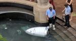 Robot cảnh sát 'chết đuối' dưới đài phun nước khi đang làm nhiệm vụ