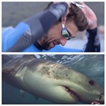 'Kình ngư' Michael Phelps bơi thi cùng cá mập trắng