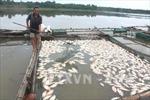 Hỗ trợ người dân bị thiệt hại 400 tấn cá chết do thủy điện xả lũ