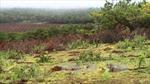 Thu hồi trên 1.300 ha đất trồng cây sai quy định để chuyển sang trồng rừng