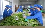 Doanh nghiệp cẩn trọng hơn khi xuất khẩu sang thị trường UAE