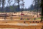 420 ha rừng ở Phú Yên bị chuyển đổi trái phép