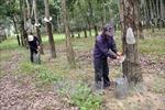 Thông tin về vụ việc lấn chiếm đất, chống người thi hành công vụ tại xã Ia Chim, Kon Tum