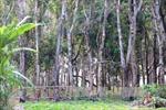 Đắk Nông: Xử lý nghiêm hành vi lấn chiếm đất công tại huyện Tuy Đức