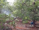 Đắk Lắk phòng trừ sâu bệnh hại cây điều
