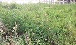 Vĩnh Phúc: Nhiều dự án y tế, giáo dục vẫn là... vùng cỏ hoang
