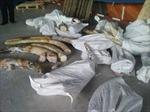 Khởi tố cán bộ hải quan đánh tráo ngà voi về tội 'Tham ô tài sản'