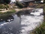 Cần xử lý tận gốc ô nhiễm báo động tại kênh Ba Bò