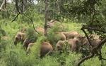 Dùng hàng rào điện để bảo vệ voi rừng ở Đồng Nai