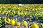 Đã có 28 doanh nghiệp nông nghiệp ứng dụng công nghệ cao