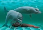 Phát hiện loài cá heo 'mini' không răng cách đây 30 triệu năm