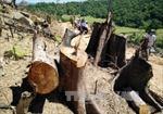 Bí thư Tỉnh ủy Bình Định: Phá rừng cả mấy tháng trời mà không phát hiện được là sao?