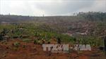 Thanh tra toàn diện vụ mất 53 ha rừng tại Đắk Nông