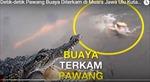 Khoe siêu năng lực, pháp sư Indonesia bị cá sấu kéo chìm nghỉm tử vong