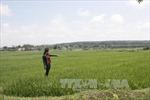 Kon Tum: Đất trồng lúa của hộ dân bỗng dưng bị 'xé' thành nhiều sổ đỏ
