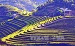 Đến với thiên đường ruộng bậc thang Mù Cang Chải