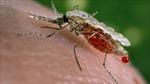 Giới khoa học lo lắng 'siêu sốt rét' có thể gây nguy hiểm toàn cầu