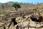Kiên quyết điều tra, xử lý nghiêm minh hành vi phá rừng tự nhiên