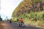 4.000 m2 rừng Lâm Đồng bị hủy diệt bằng thuốc diệt cỏ