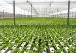 Agribank đồng hành cùng nông nghiệp sạch