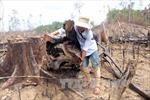 Khởi tố, bắt tạm giam đối tượng hủy hoại rừng phòng hộ Tiên Lãnh, Quảng Nam