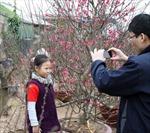 Người trồng hoa Hà Nội bận rộn trong ngày Tết 2012